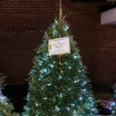 Religious Education Christmas Tree photo album thumbnail 1